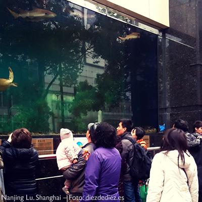 Tiburones en el escaparate. Shanghai.